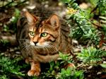 ((bold))von: ~immy~((ebold)) Name:Rocky Alter: bald 4 Jahre Geschlecht: männlich Tierart+Rasse: Katze (Bengal) Aussehen: attraktive