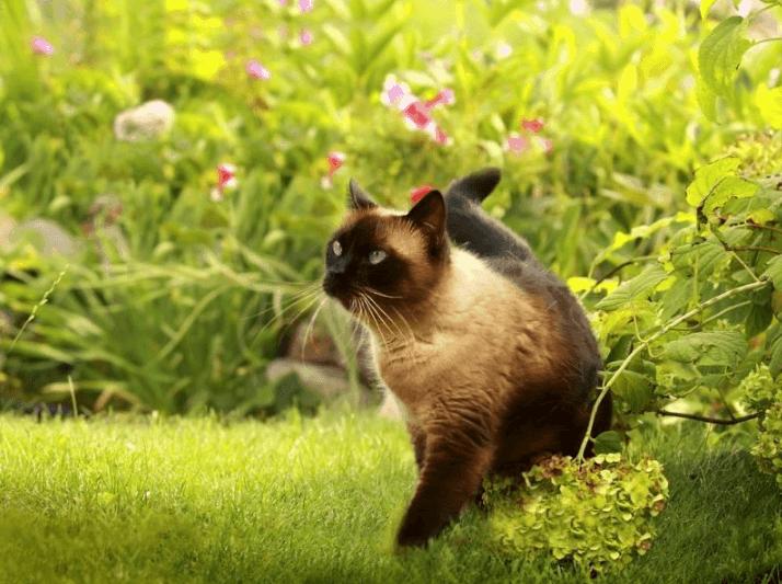 ((bold))von: Time_Traveler((ebold)) Name: Time Alter: 11 Monate Geschlecht: Weiblich Tierart+Rasse: Katze (Siam) Aussehen: siehe Bild Statur: siehe Bi