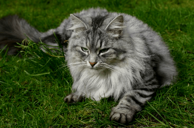 ((bold))von: Paw((ebold)) Name: Filou (Lou) Alter: 9 jahre Geschlecht: mänlich Tierart: Katze Rasse: unbekannt Aussehen: http://www.du-palais-d-hiv