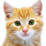 ((bold))von: ~immy~((ebold)) Name:Shiny Alter: ca. 1 Jahr Geschlecht: weiblich Tierart+Rasse: Katze (Rasse unbekannt) Aussehen: goldgelbes, weic