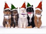 Weihnachten in WarriorCats- unser Adventskalender