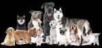 Welche Größe sollte dein Hund am besten haben?