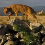 """((big))((purple))""""Hab Mut kleine Katze. Denn nur dein Mut ist stark genug um sich denn Schatten zu widersetzen und dein Überleben zu sichern.&qu"""