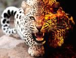 Warrior Cats ~ Seelenclan ~ Aschenflug
