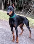 Survivor Dogs - Zwei Rudel im Krieg Bilderliste