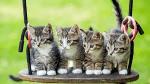 Welche Fellfarben haben ihre Katzen?