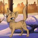 Wer bist du von Warrior Cats