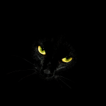 Warrior Cats Whatsapp!