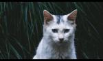 Die TierClans - Bilderliste #1