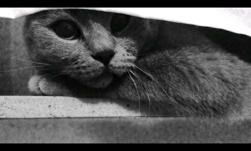 ((gray))Moorauge! Sie ist hübsch, nicht wahr? ;) Das sie auf einem Auge blind ist, wissen die Wenigsten. Auch von ihrer Abstammung weiß ich nicht vi