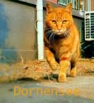 ((olive))Voilá, Dornensee. Er ist der Bruder von Düsterlicht. Über ihn weiß ich eigentlich aber auch nicht viel ^-^