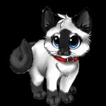 Aikos Kätzchen Mira