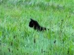 Eine dunkle Gestalt schlängelt sich durch das Gebüsch. Gras streift ihren Pelz und der Wind rauscht in ihren Ohren. Plötzlich entdeckt sie ein ande