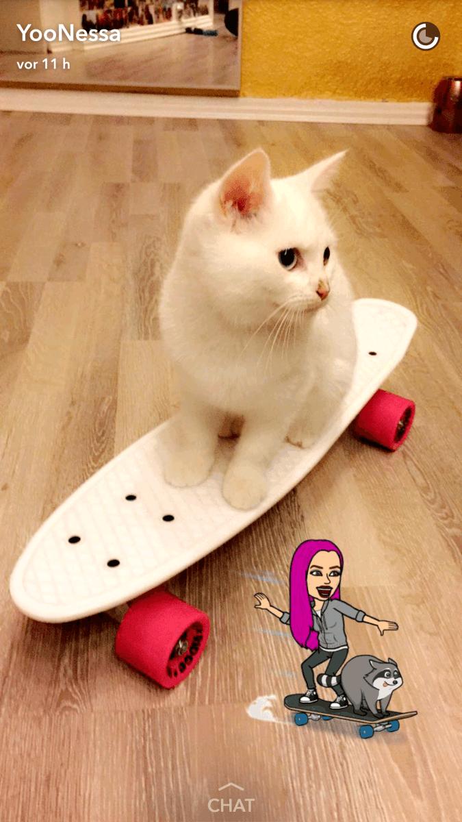Wie viele Katzen hat Yoonessa?🐱