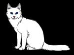 Frostfell - schönes, weißes Fell und blaue Augen