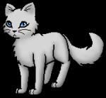 Glanzfell - sehr hellgraue Kätzin mit ungewöhnlich blauen Augen