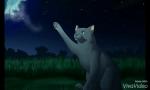Welche Katze aus dem WolkenClan bist du?
