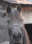 Bist du reif für ein eigenes Pferd?