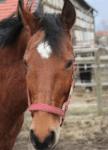 Für Kinder: Was sagen deine Eltern zu einem eigenem Pferd? Für Erwachsene: Was sagen deine Freunde dazu?