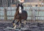 Name: Nalana Alter: 17 M/W: W Pferd: Kosta Riv Alter der Pferdes: 7 Rasse des Pferdes: Welsh Cob Stute/Hengst/Wallach: Wallach Zimmer: Haupthaus Aktiv