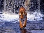 ((big))((red))Der Tigerclan((ebig))((ered)) Das Territorium: Der Tigerclan lebt in einen Laubwald durch den ein kleiner Bach fliest der in einen Teich