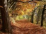 Magst du den Herbst?