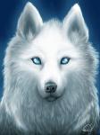 Name: Luna Alter: Fast 2 Jahre Charakter: Freundlich, wild, psycho, bei jeden Spaß dabei, trotzdem leicht reizbar, tollpatschig (sogar seeeeeehr) Aus