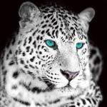 Steckbriefe: ((big))White Cheetah ((ebig)) Name: Icya Alter: 21 Monde Geschlecht: weiblich Rudel: Lebensrudel^^ Rang: Bändigerin Element: Wasser Auss