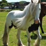 Wie gut kennst du Pferde?