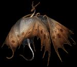((bold))Mia & Moon((ebold)) Name: Mia Alter: 17 Drache: Moon Aussehen: braune Haare die zu einem seitlichem (rechtem) Fischgrätenzopf geflochten sind