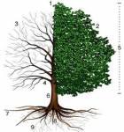 Bäume-Quiz