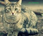Warrior Cats RPG - der Moosclan