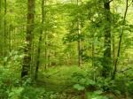 ((blue))((unli))Territorium, Lager und Beute((eunli))((eblue)) ((green))Territorium((egreen)) Durch das Territorium fließt ein kleiner Bach. Der Wald