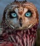 Und das Bin ich: Name: Brombeerschweif Alter:15 Aussehen: Sehr dunkles rötliches Gefieder und Grüne Augen Besonders Klein, Gebrochener Flügel Chara