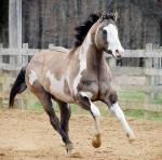 Wenn ihr euer Pferd hier unterstellen wollt: Name: Flying Light Alter: 13 Geschlecht: Hengst Charakter: ruhig, stur, freundlich, schlau, meisten brav,