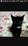 Das ist Frau Büsi (heisst auf Schweizerdeutsch Frau Katze) ♥♥♥