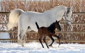 Teste Dein Pferdegrundwissen