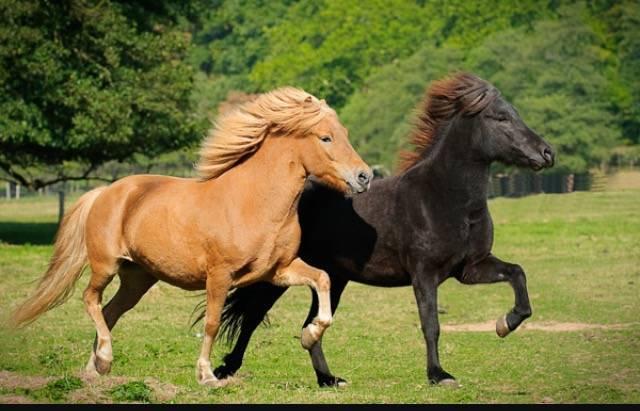 Meine Schönsten Pferdebilder