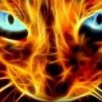 Katzen und spezielle Bräuche Katzen: Die Katzen können sich in Feuerkatzen verwandeln. Wenn sie eine Feuerkatze sind können Sie alles was sie berü