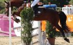 Welcher Beinschutz ist in Springpferdeprüfungen laut LPO NICHT zugelassen?