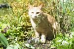 Warrior Cats Fakten von allen Staffeln