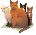 》Allgemeinwissen ((big)) ((bold)) Die Definition von Warrior Cats ((ebig))((ebold)) ((maroon)) ((small)) נᴇᴅᴇʀ, ᴅᴇʀ sıcн нıᴇʀ �