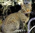 Hallo! Fangen wir mal mit der ersten Frage an. Welche Fellfarbe hättest du als Warrior Cat?