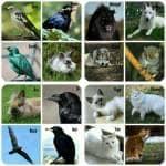 ((green))((bold))Tiere((egreen))((ebold)) Jeder der Bewohner besitzt 1 bis 3 Tiere. Sie fungieren als Mentoren und Wächter zugleich, sind aber nicht