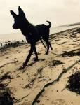 Das ist Duster, Fridas Hund.
