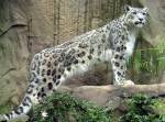 Dead, Dennas Leopard.