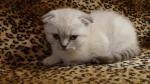 "Katze heisst "" Chats """