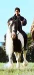 Topsy ist das ruhigste Pferd auf dem Martinshof und wird immer den Anfängern gegeben, obwohl Topsy Holger gehört.