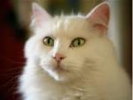 ((olive))Bulmchen's Steckbrief ((eolive)) Name: Wolkenflamme Alter: 31 Monde Geschlecht: Weiblich Rang: Kriegerin Aussehen: Sie ist eine hübsche