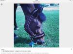Pferde haben verschiedene Rassen?